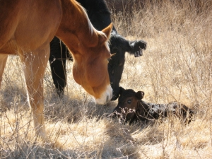 Curious horse welcomes new baby!
