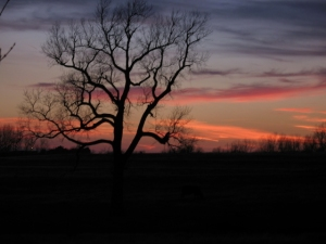 Sunset in the Osage